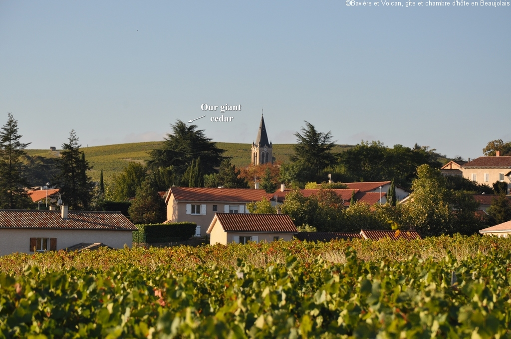 Character-beaujolais-cottage-self-catering-accomodation-Baviere-et-volcan (106)