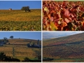 Character-beaujolais-cottage-self-catering-accomodation-Baviere-et-volcan (157)