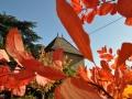 Baviere-et-Volcan-Gite-Chambre-Hote-Charme-4-etoiles-La-tour-Beaujolaise (020)