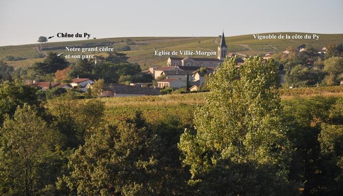 Bavière et volcan en Beaujolais, gîte Beaujolais, chambre d'hôtes Beaujolais, grands crus Morgon